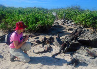 Beata Radecka, organizatorka wyjazdów na Galapagos, obserwuje legwany