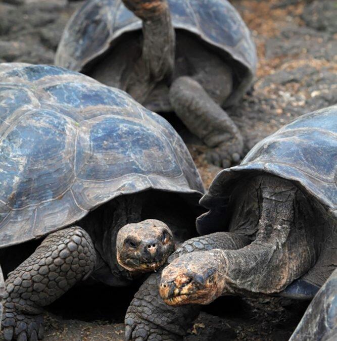 Wulkany Ekwadoru i magiczne Galapagos