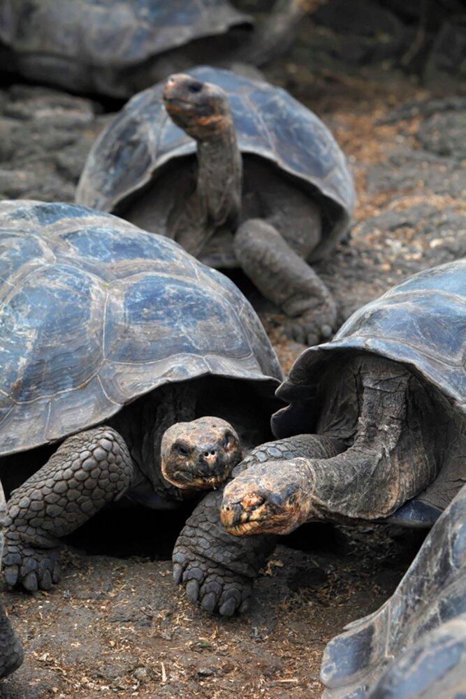 Wyprawa na wyspy Galapagos, biuro podróży Gotravel