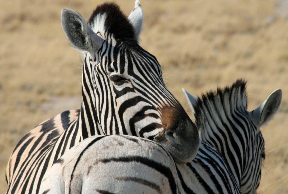 Pustynna Namibia • najwyższe wydmy świata i świat dzikich zwierząt