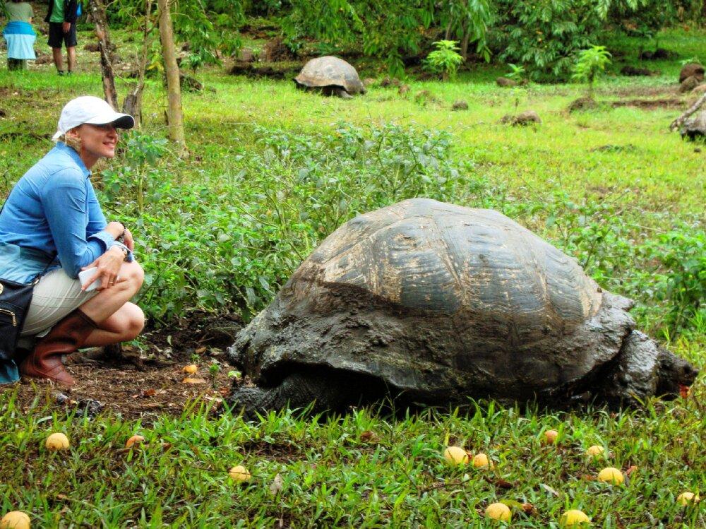 Spotkanie z żółwiem w czasie wyprawy na Galapagos i do Ekwadoru