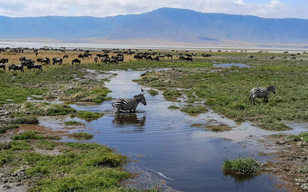 safari w Afryce Tanzania krater Ngorongoro